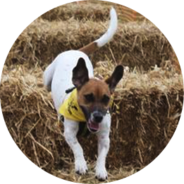 Dogs Trust Snetterton