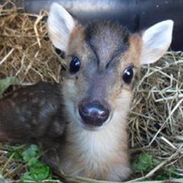 Hallswood Animal Sanctuary